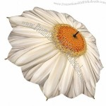 "35"" White Daisy Umbrella"