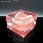 Acrylic Paperweight Embedded Teeth Model
