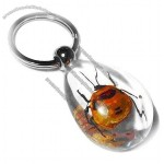 Amber Key Chains