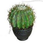 Artificial Potted, Decorative Ball Cactus