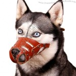 Dog Mouth Cover