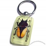 Insect Keychain Yellow Edge Stag Beetle