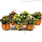 Pumpkin Shape Porcelain Flower Pot